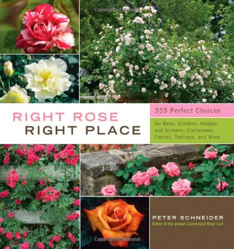 Post image for Right Rose, Right Place