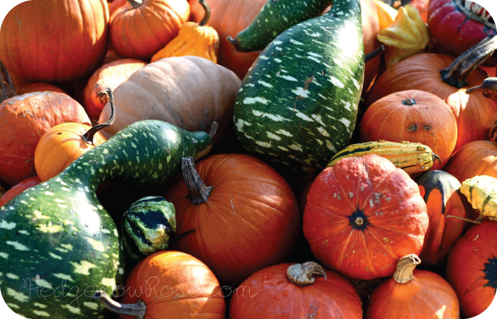 Post image for Unusual Pumpkins & Gourds for Autumn Displays