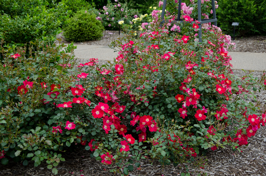 Oso Easy Cherry Pie | via Hedgerow Rose