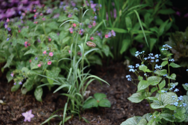 Brunnera, Pulmonaria and Fritillary
