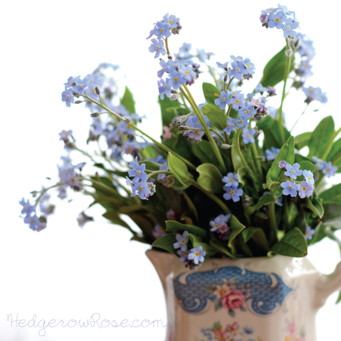 Post image for Forget-Me-Nots