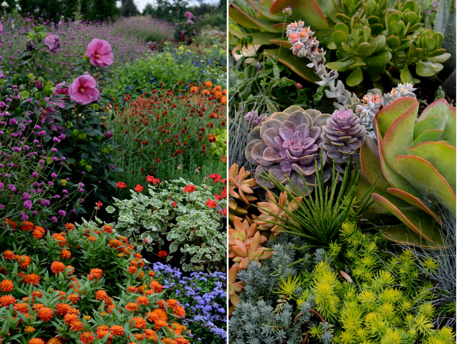 Post image for Colorful Plant Combinations