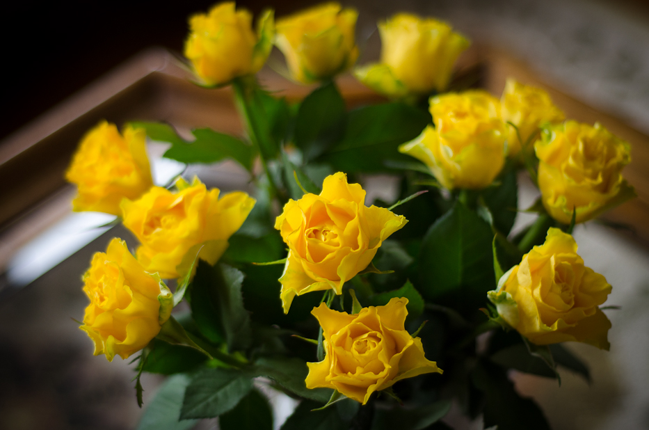 Yellow Roses 3 | Hedgerow Rose