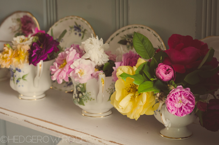 roses in teacups 2 | Hedgerow Rose