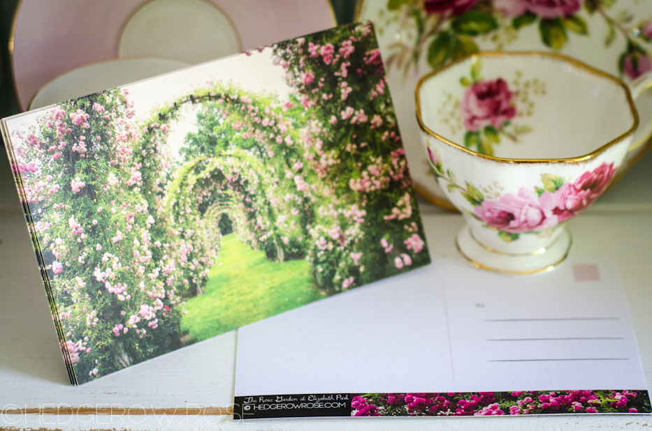 Fairy Tale Rose Garden Postcards | Hedgerow Rose_