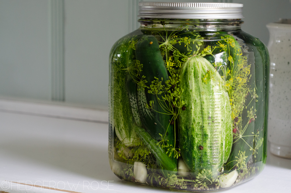 Making Pickles 2