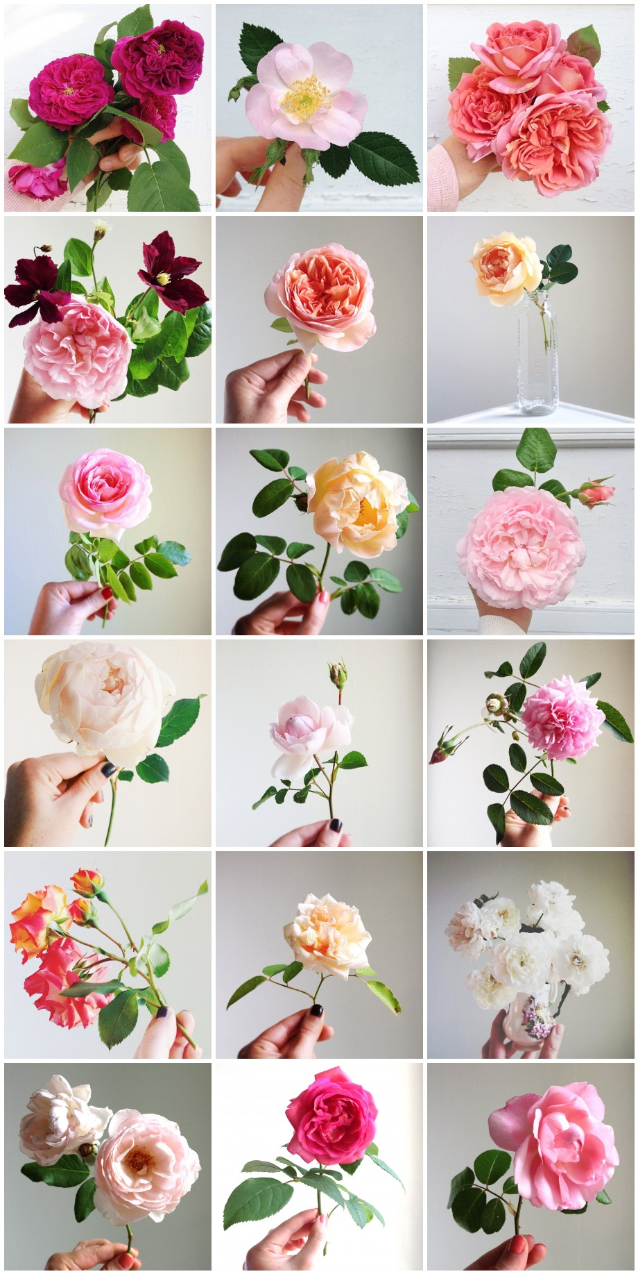 Simple Beauty - A Collection of Roses via Hedgerow Rose