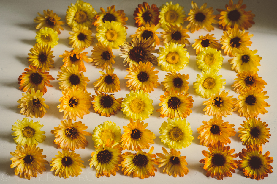 collection of calendula vintage filter