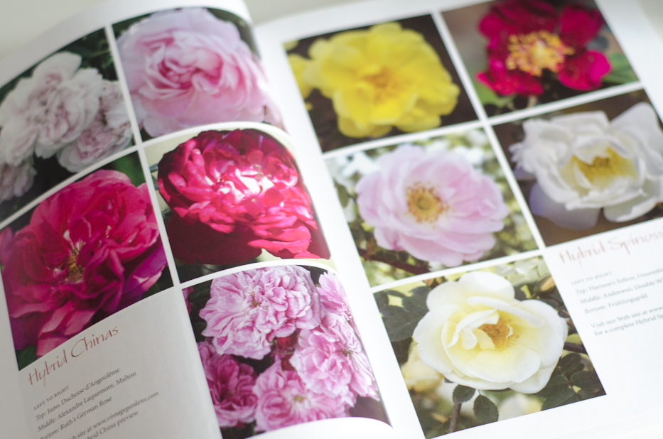 Book Giveaway! Vintage Gardens Book of Roses 4