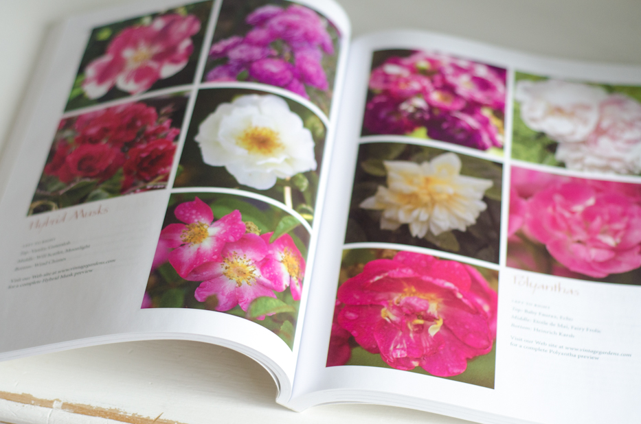 Book Giveaway! Vintage Gardens Book of Roses