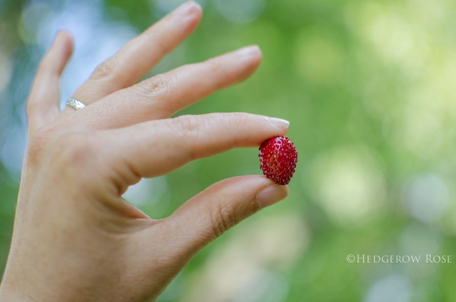 Mignonette Alpine Strawberries 5