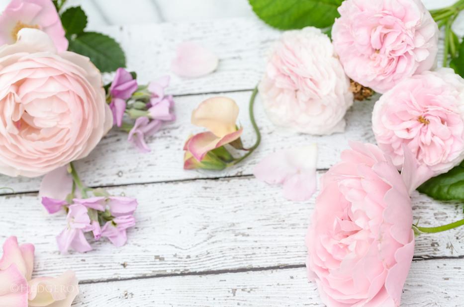 Blush Pink Roses 4