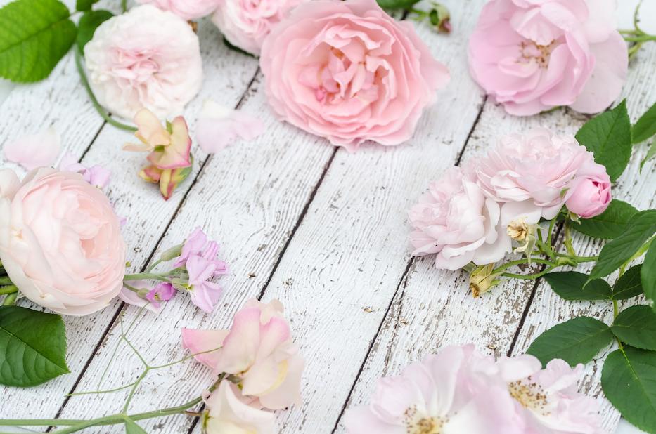 Blush Pink Roses 5