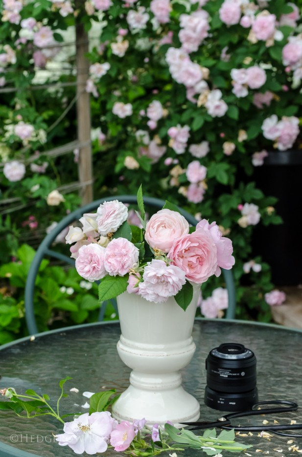 Bouquet of blush pink roses 1