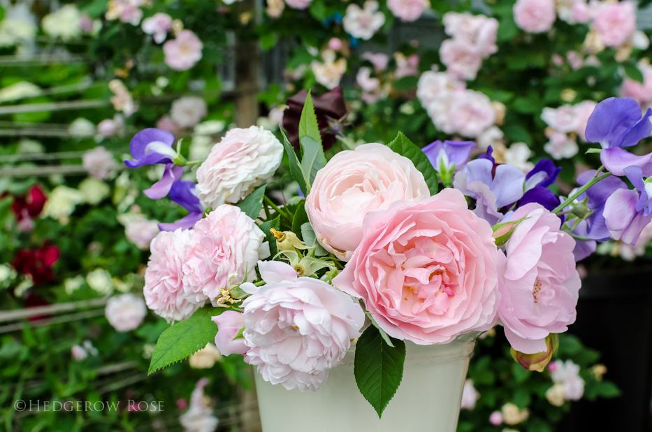 Bouquet of blush pink roses 3