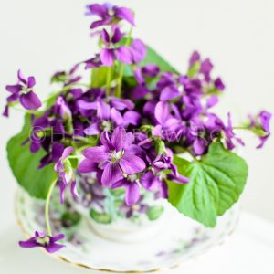 Violets in a Teacup Thumbnail