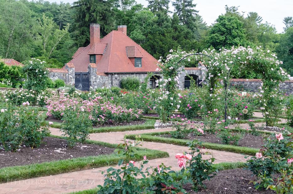 Biltmore Rose Gardens via Hedgerow Rose - 5