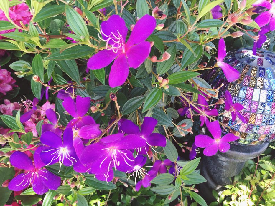 Hendersonville Garden Jubilee 8