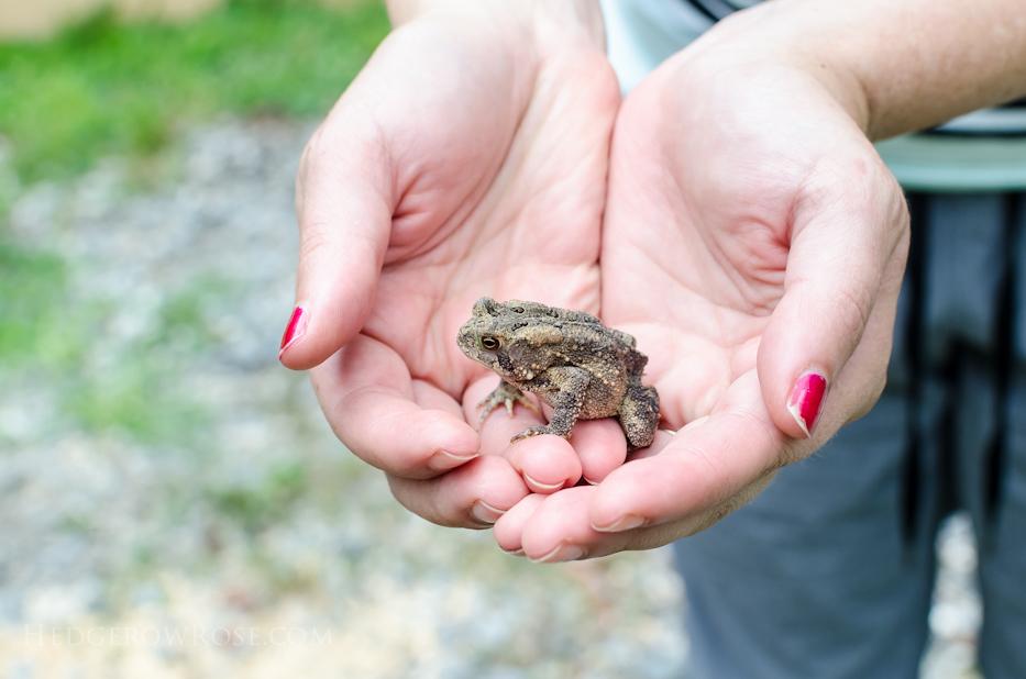 toad friend