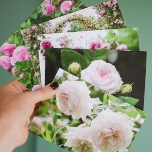 Romantic Roses Greeting Cards Set of 5 - Shades of Pink_