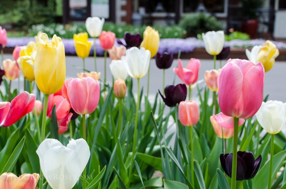 Biltmore Blooms - 1