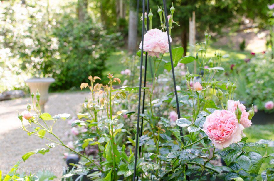 garden 5-17-3