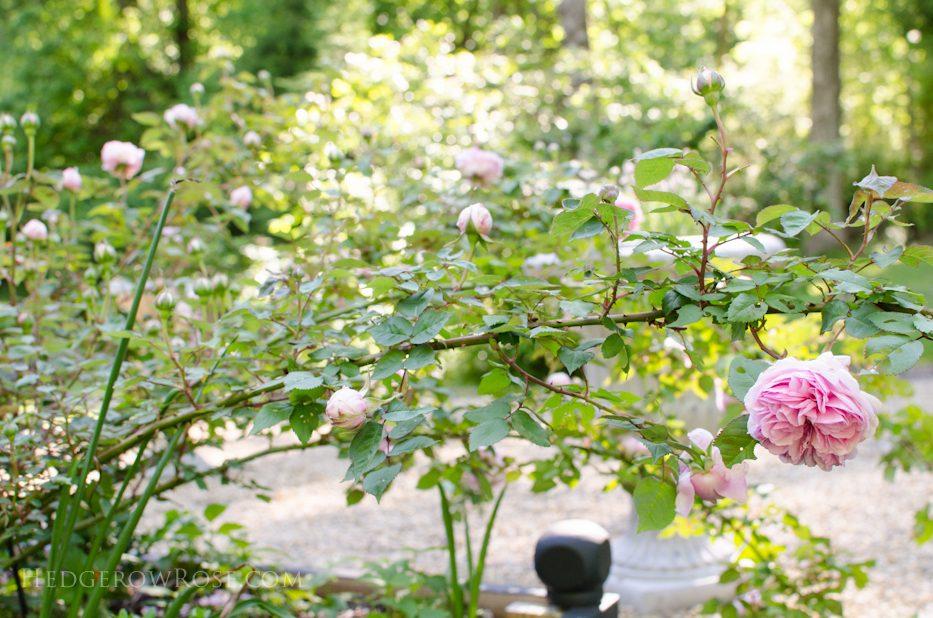 garden 5-17-4