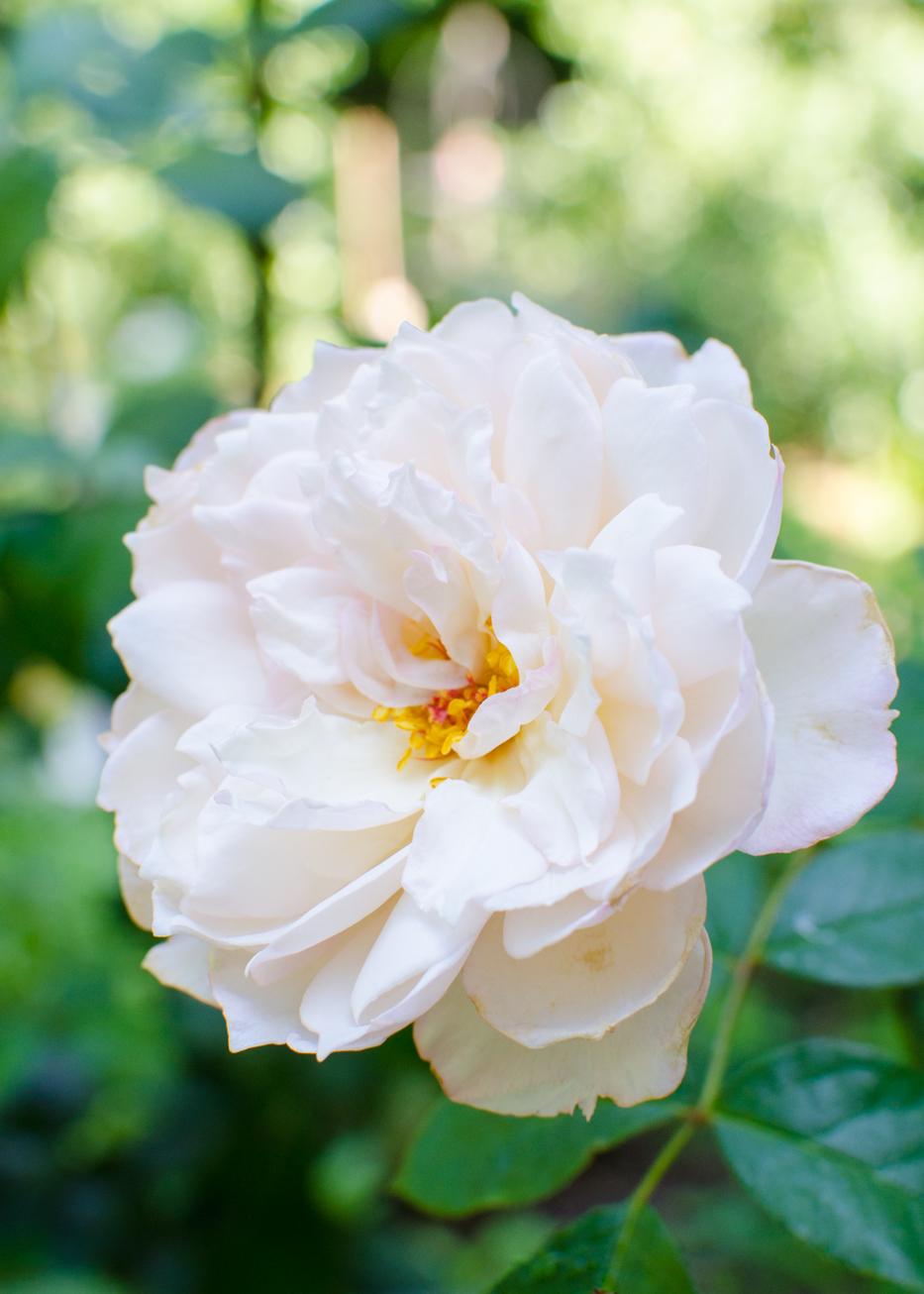 the generous gardener july 2016
