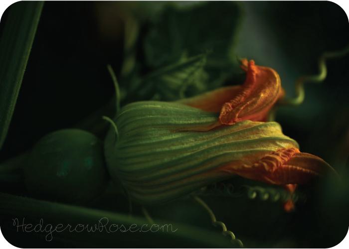 LuminaPumpkinBlossom
