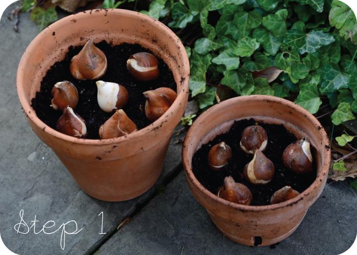 Come far Crescere i Tulipani in un Vaso con Acqua ...