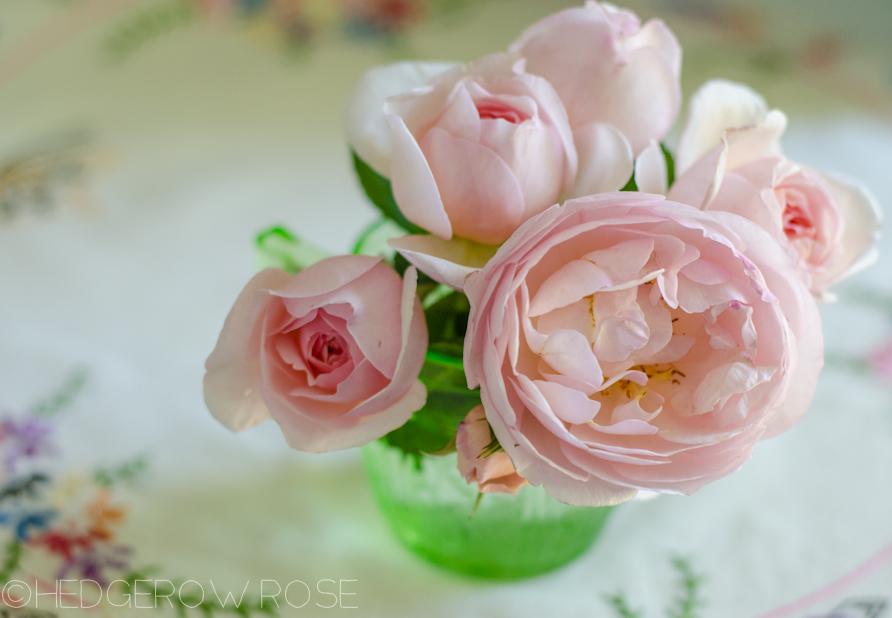 Heritage English Rose | David Austin Rose | Hedgerow Rose