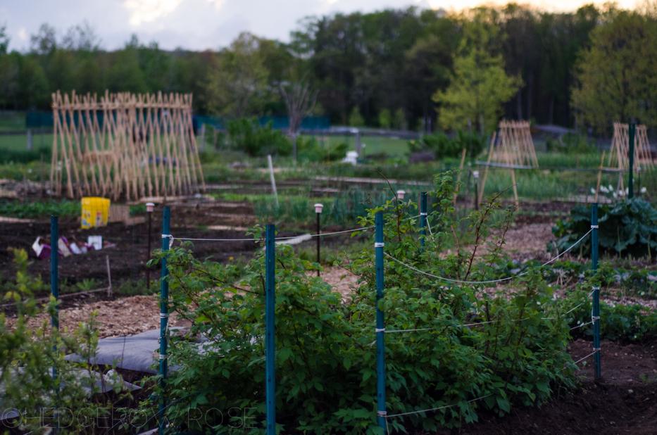 public veggie garden