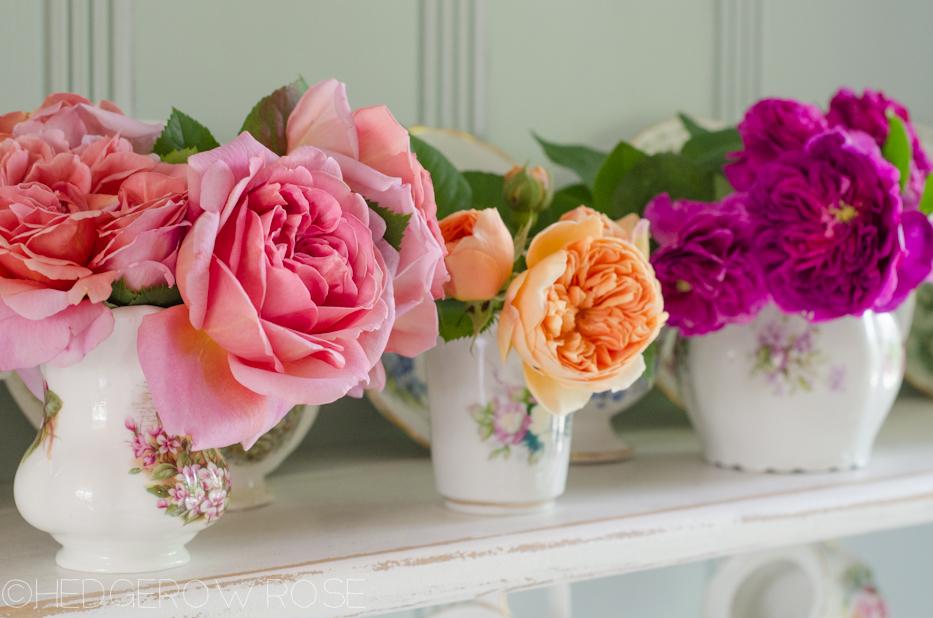 june 1 roses 4