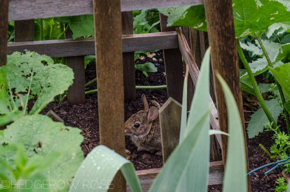 naughty baby bunny