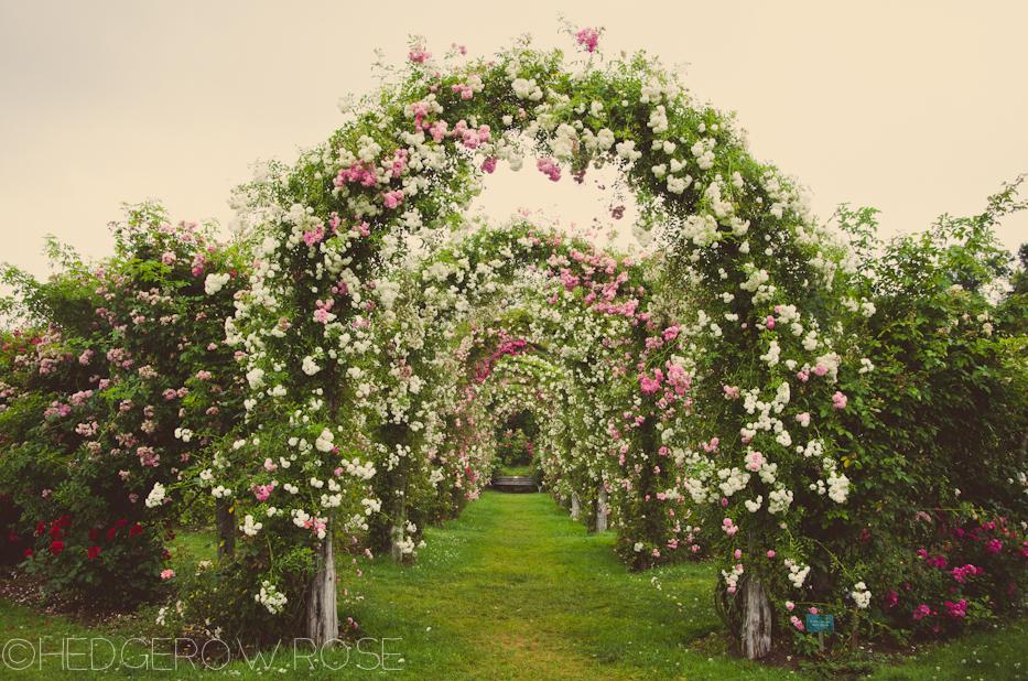 Elizabeth Park Rose Garden 16