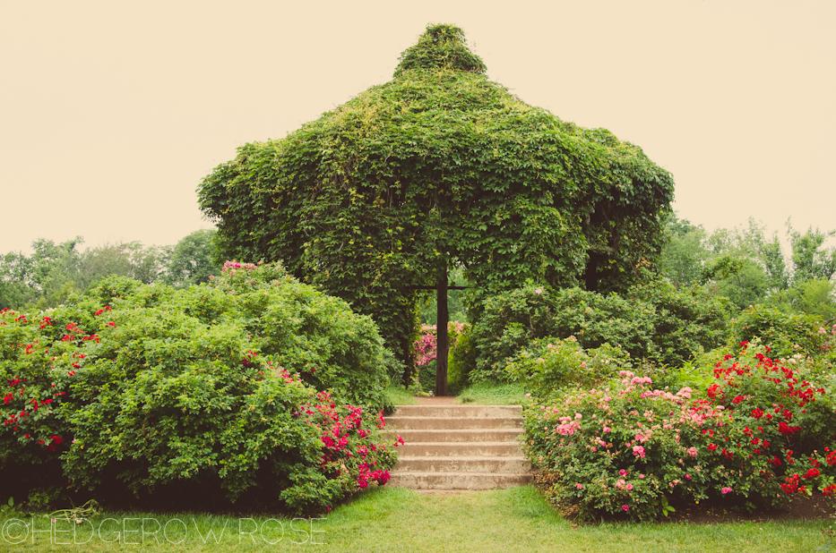 Elizabeth Park Rose Garden 41