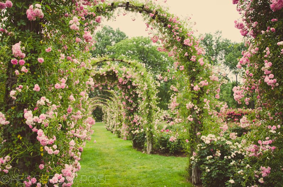 Elizabeth Park Rose Garden 42