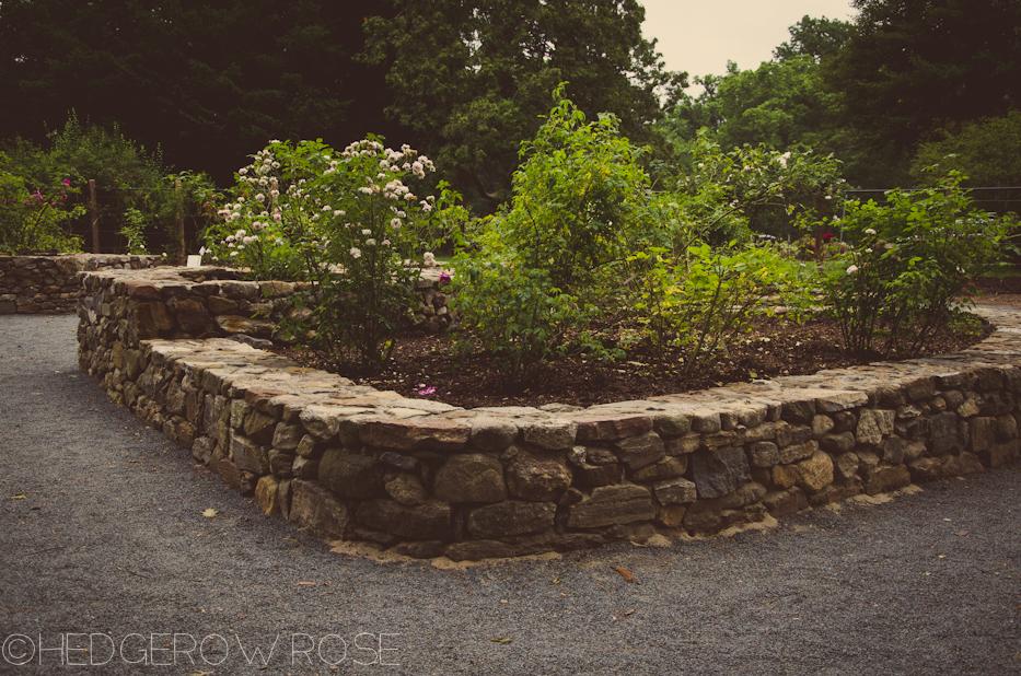 Elizabeth Park Rose Garden 15 | via HedgerowRose.com