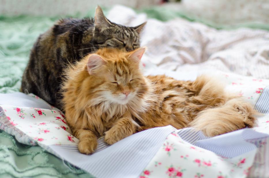 kitties on my quilt