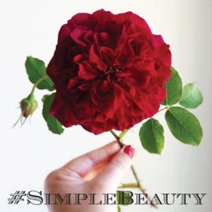 Simple-Beauty-Rose-Series-on-Instagram