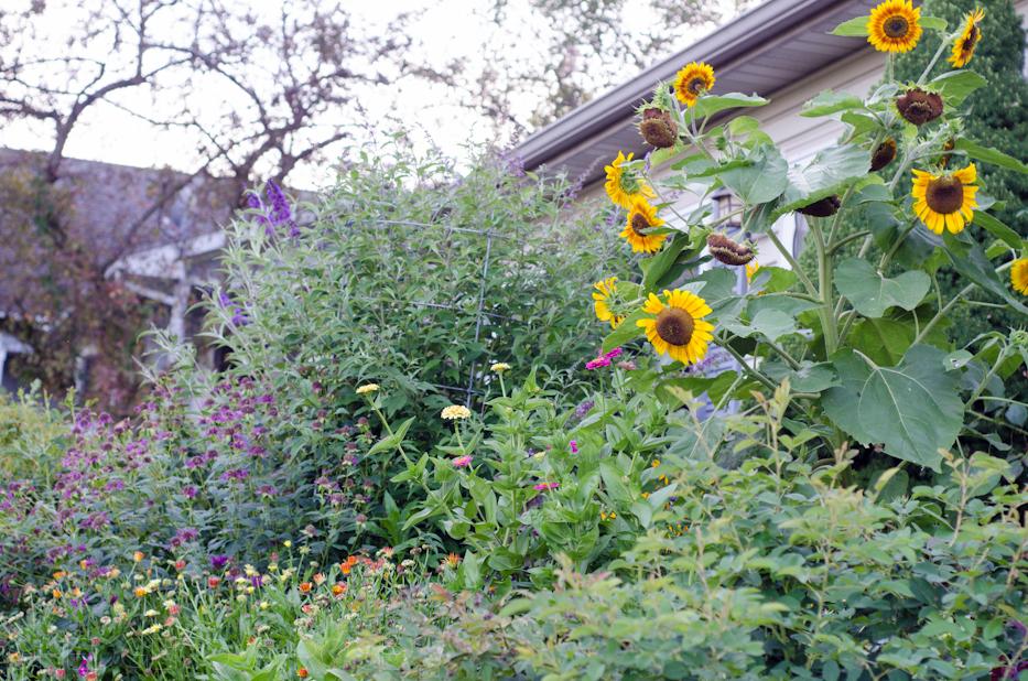 front garden in july 2