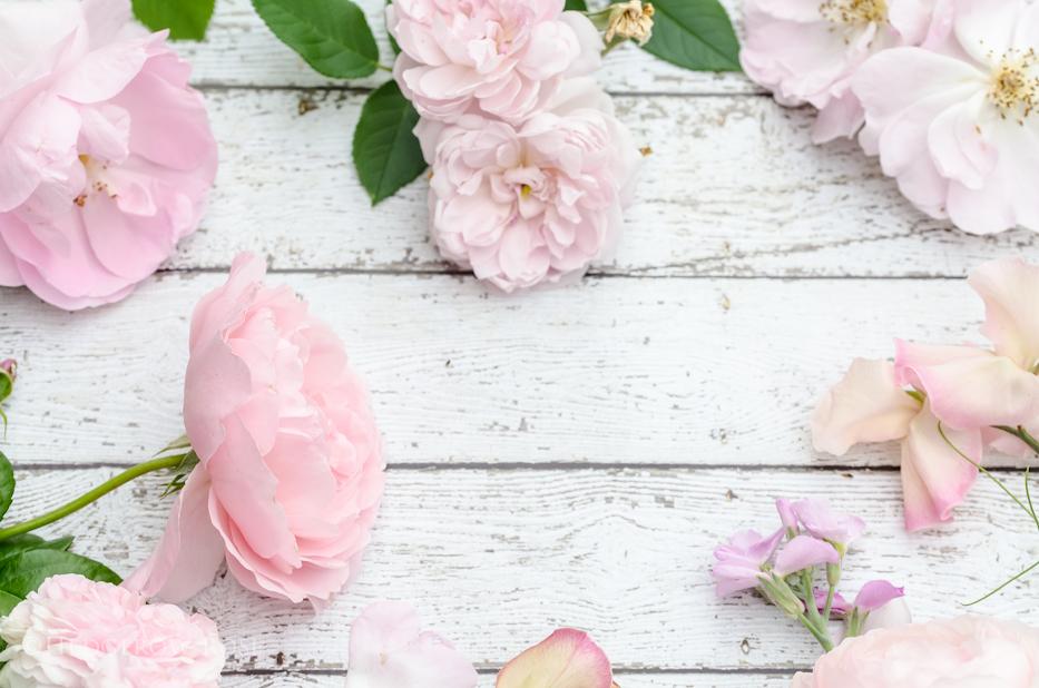 Blush Pink Roses 2