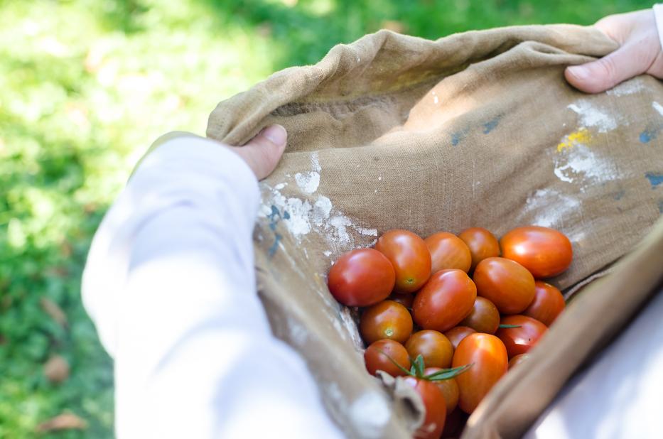 tomatoes 10-19-1