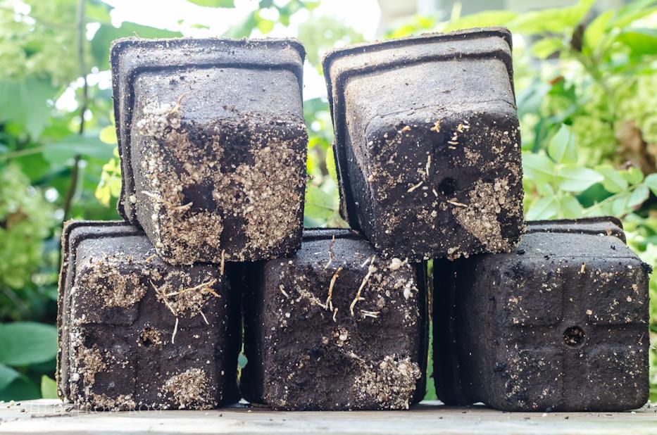propagating roses 10-18-2