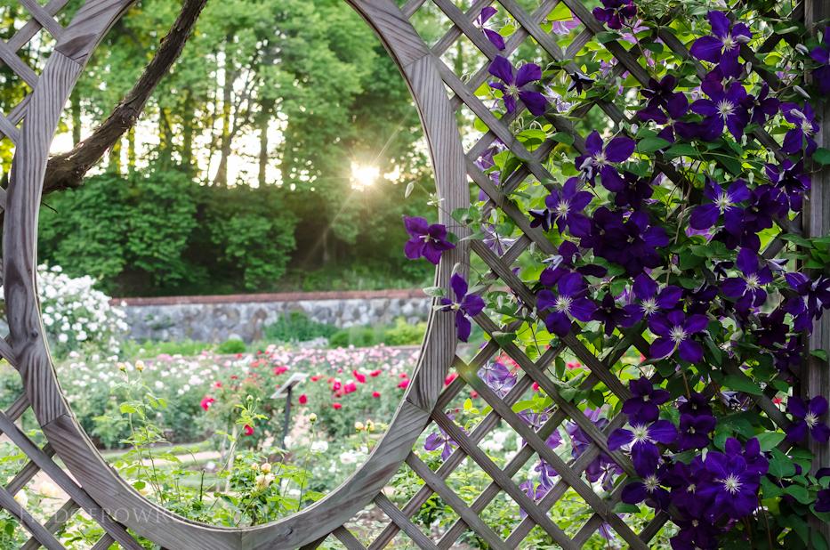 Biltmore Rose Gardens!