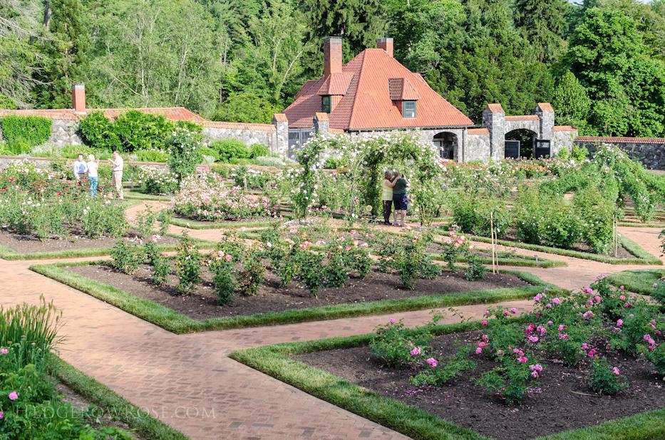 Biltmore Rose Gardens via Hedgerow Rose - 2