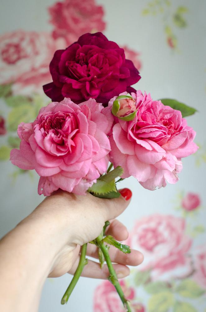 cath kidston and david austin roses