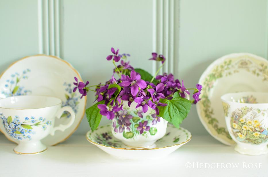violets 2014 - 3
