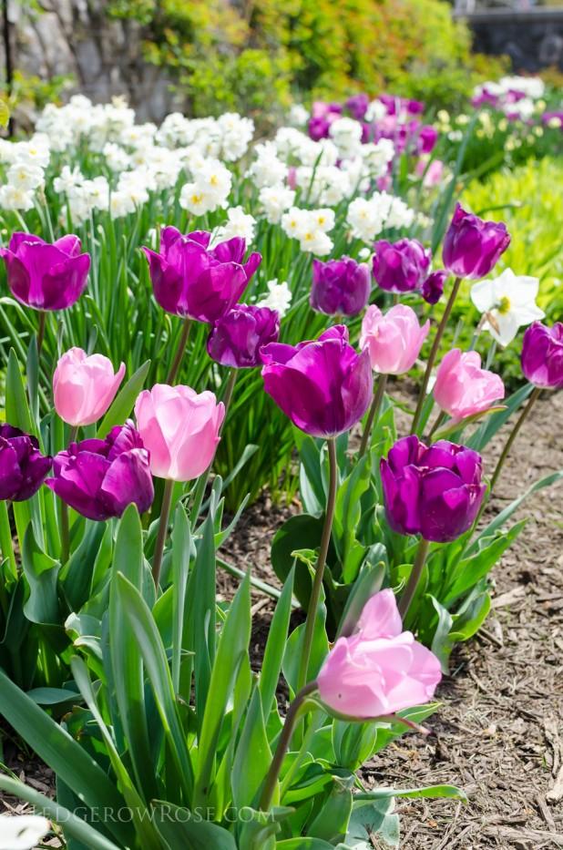 Biltmore Blooms - 10