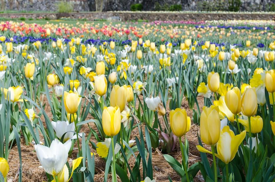 Biltmore Blooms - 12